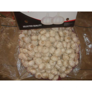 Good Quality Pure White Garlic 10kg Loose Carton