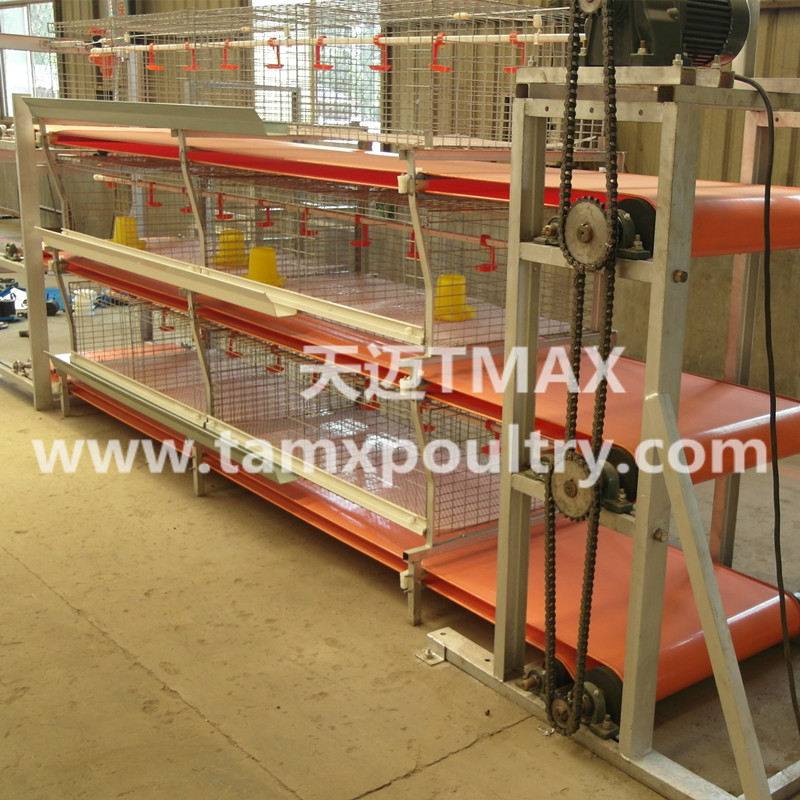 Automatic Broiler Manure Removal System