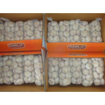 Normal White Garlic packed 1Kg 10bags Carton