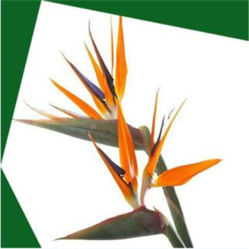 Best Quality for China Artificial Trees,Artificial Palm Tre,Artificial Tree for Weddings,Decorative Plants Artificial Trees Supplier Artificial strelitzia reginae aiton pot supply to France Wholesale