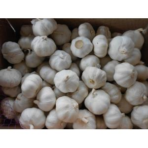 High Quality Fresh Pure White Garlic
