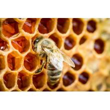 Best quality and factory for Acacia Honey Natural Comb Honey Products From Honey Comb supply to Reunion Importers