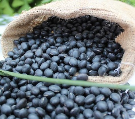 HPS Big Black Beans with Green Kernels