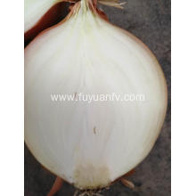 Fresh Yellow onion to Indonesia market