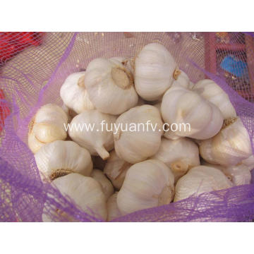 Pure white garlic high grade for sale