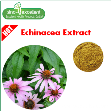 Echinacea Extract with Polyphenol powder