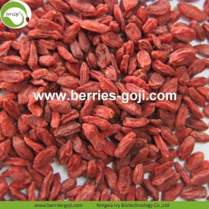 Wholesale Healthy Red Eu Standard Goji Berries