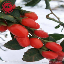 Promote Skin Health Kidney Benefits Organic goji Berries