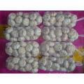 Normal white garlic packed in 1kg 10bags carton