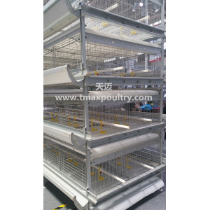 H Type Pullet Chicken Equipment