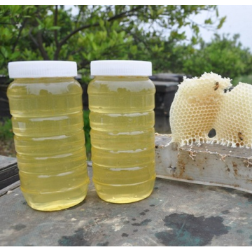 2018 harvest nature pure organic acacia honey