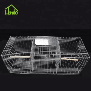 Collapsible Larsen Trap cage