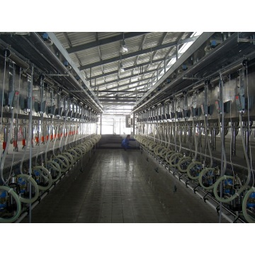 Automatic milking parlor for cows