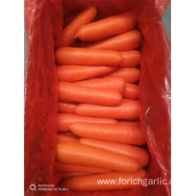 Crop 2019 Fresh Carrot Good Quality