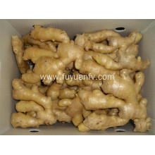 Professinal Exporter for air dried ginger