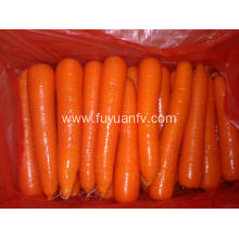 Fresh Carrot in weifang