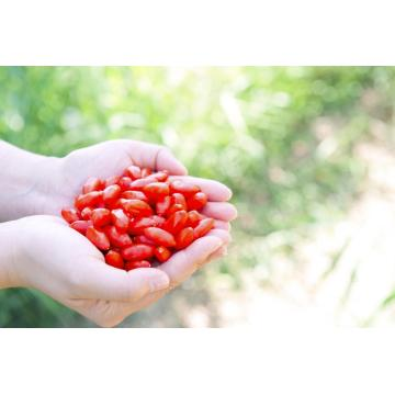 High Quality improve disease resistance Goji Berry/wolfberry