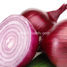 Best Quality Fresh Peeled onion for Sale