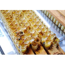 Fresh royal jelly with high quality