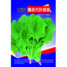 green stem green water spinach seeds