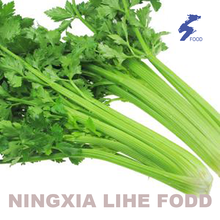 Good quality 100% for Dehydrated Celery Celery leaves  Air Dried export to Montserrat Suppliers