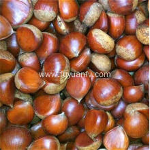Two types of Chinese chestnut