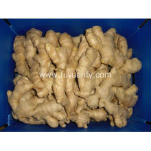 Factory Supply organic air dried ginger