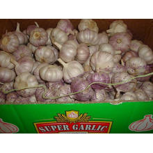 10kg carton in Loose Packing Normal White Garlic