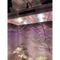 Malosiaga moni 630watt COB 3000W Grow Light