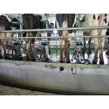 dairy cow milking machine
