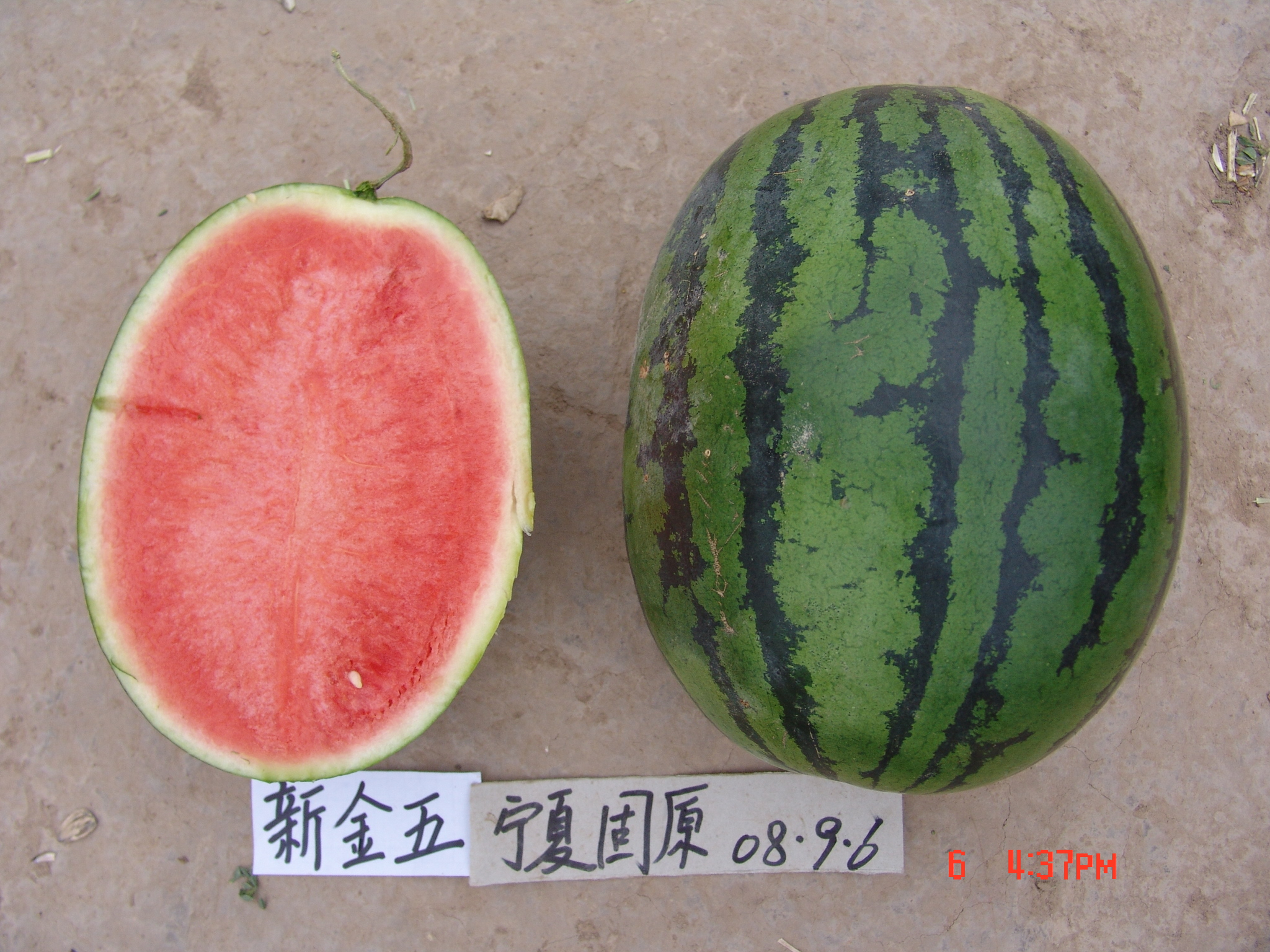 Hybrid Watermelon Seeds for Planting