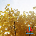 Anti UV Artificial Ginkgo Tree