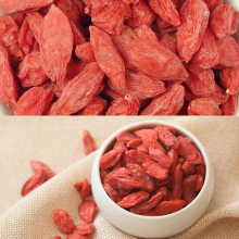 High Quality for Low Pesticide Goji Berry,Goji Berry Vitamins,Cooking Soup Goji Berry,Conventional Goji Manufacturers and Suppliers in China Organic Dried Bigger And Juicy Sweet 180 280 export to Austria Supplier