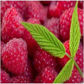 New Harvest Best Selling Freeze Dried Raspberry