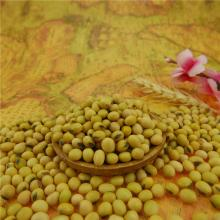 High Quality for High Protein Yellow Soybean,Natural Yellow Soybean,Organic Yellow Soybean Manufacturers and Suppliers in China Soybean 6-8mm on sale supply to French Polynesia Supplier