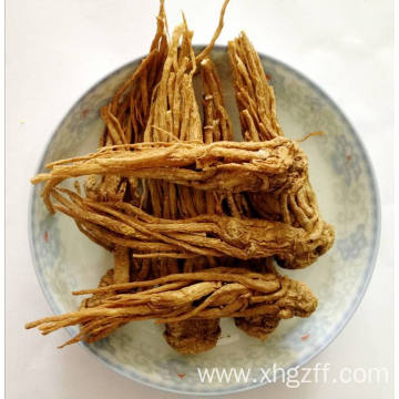 Reliable for Pure Angelica Root Essential Oil Angelica Root Essential Oil 50ml supply to United States Manufacturers