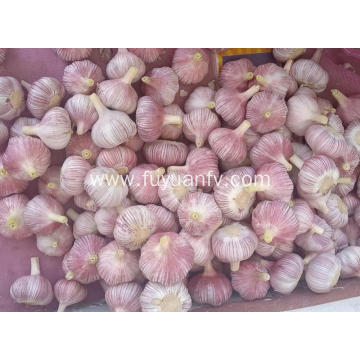 Normal white garlic 2019 new crop