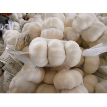 Cheap price for Dry Normal White Garlic 3p garlic in mesh bag supply to Barbados Exporter