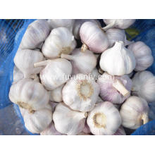 New crop 2019 garlic for export
