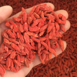 Wholesale Nutrition Healthy Low Pesticide Goji Berry