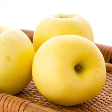 NingXia New Fresh Big Size Golden Delicious Price