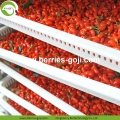 Factory Nutrition Dried Organic Certificated Goji Berry