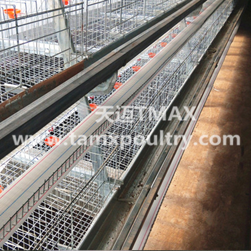 Layer Cage System for Chicken Farming