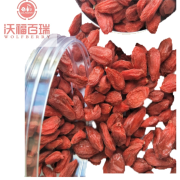 Wholesale New Harvest GMP Factory goji berries