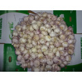 Fresh Normal White Garlic 5.5cm