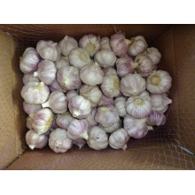 Normal White Garlic Crop 2019 From Jinxiang
