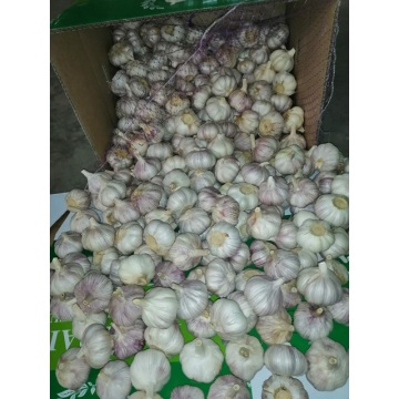 how to store fresh garlic from garden