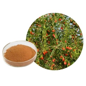 Chinese wolfberry extract powder.