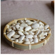 sell chinese new crop white flat kidney bean