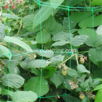 Climbing Fruit And Vegetable Plant Supporting Extruded Net
